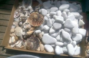 Sea shells and pebbles used in the fairy gardens